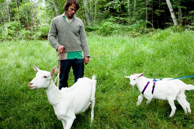 Goat Love 2