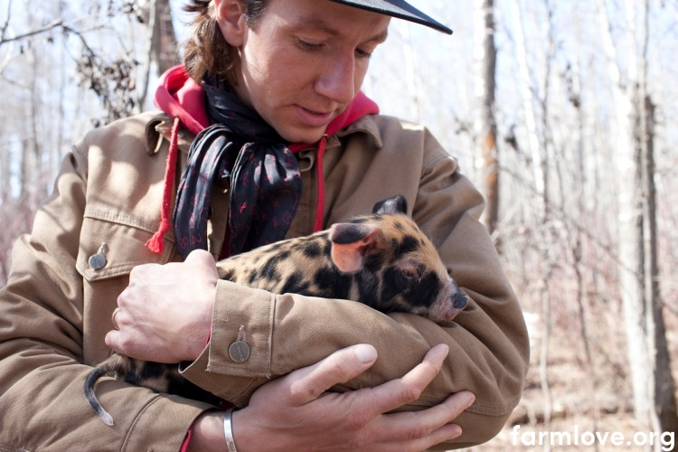 Blake Hall with baby pig in forest stand on farmland in Red Deer, Alberta. Blake practices holistic management. These pigs spend time in a forest stand helping to root up the forest floor, decompose the woody debris, turn up the soil, fertilize the land, and germinate native species. Blake will move them through the area so that they don't spend too much time in any one spot and so that the ecology benefits the most possible from its interactions with these land stewards.